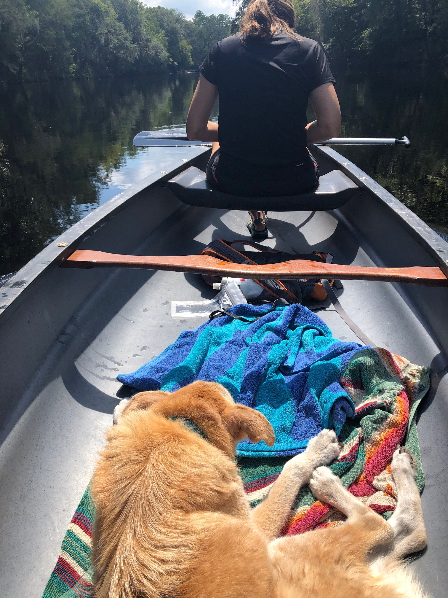 Orang dog lying in a canoe in the water with back of person up front