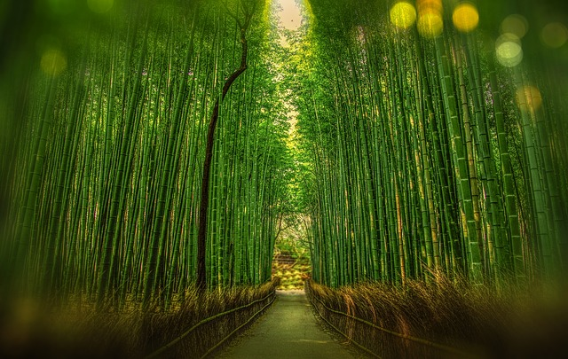 A path going through a forest of bamboo.