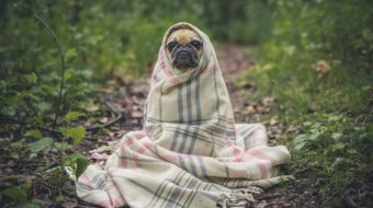 Dog wrapped in blanket outside