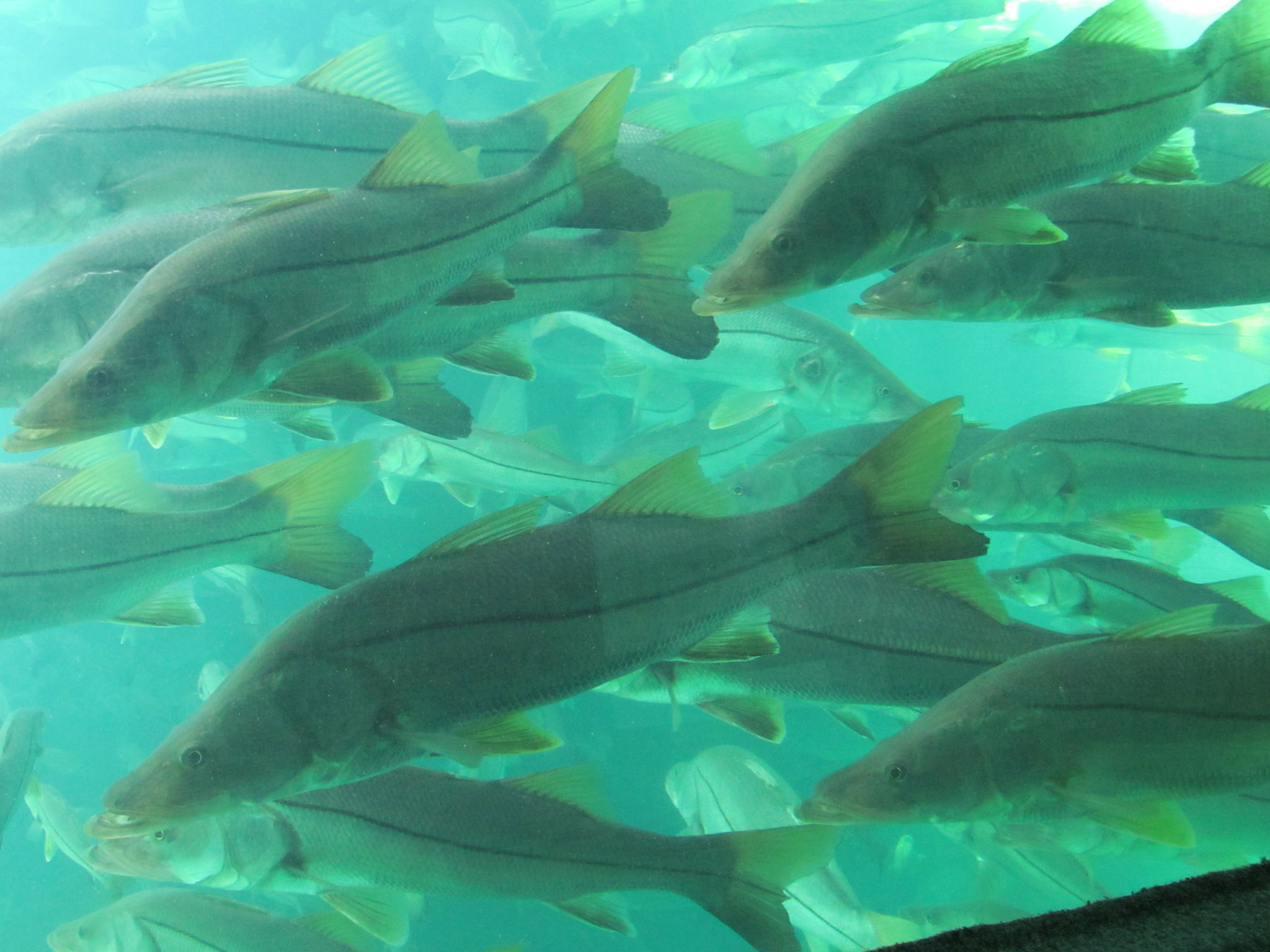 A school of fish underwater