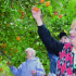 Anna Magee, Nancy Wathen and Karen Santee reach up to smell oranges at Majorie Kinnan Rawlings State Park.