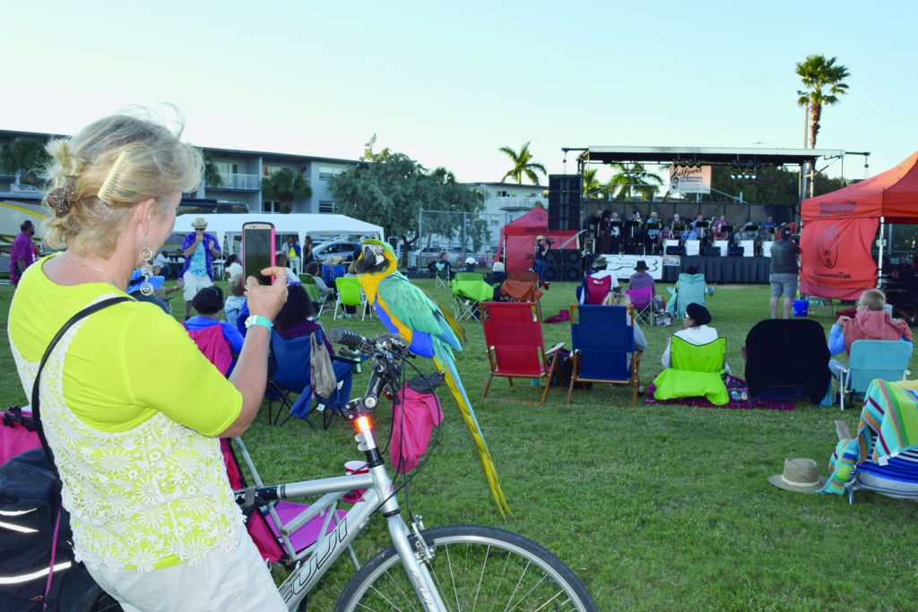 "Kelly Sheehan of Gulfport, with her bicycle, takes a photo of Up Up, her blue and gold macaw, as they listen to music by the Tomkats Jazz Orchestra. ""It's fantastic,"" she said of the event. ""I hope it returns. There's some really good jazz music."""
