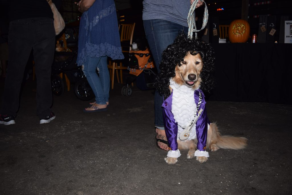 "Olive the golden retriever, aka Prince, is dressed for the Halloween costume contest at the sixth annual Party for the Paws held Saturday, October 22, at Cage Brewing Co. in St. Petersburg. The event, which celebrated Halloween and the fall season, was a fundraiser for the Pet Pal Animal Shelter and also included raffles, food, drink, vendors and activities for kids. Olive's owner, Brandy Arnold of Dunedin, said she made the costume herself as ""a tribute, since we lost Prince this year. It's his Purple Rain outfit."" The costume included a black wig and a miniature replica of Prince's guitar that she bought on eBay. Arnold said Olive loves the attention she gets wearing her costumes, which Arnold makes once a year. ""If I put out a shirt, she jumps into it head first,"" she said."