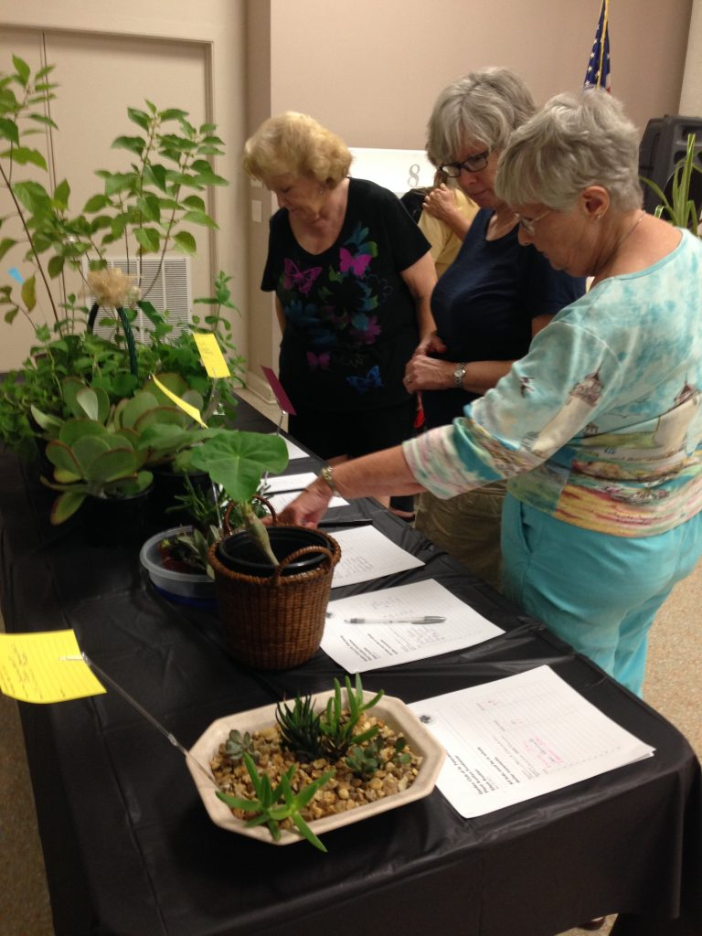 plant auction 3