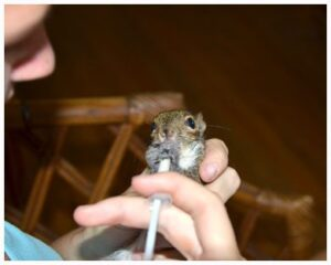 Buster the Squirrel, in better days.