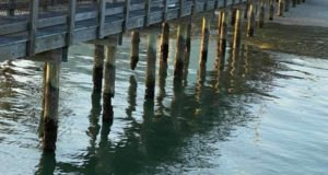 "On Monday, May 11, Gulfport resident Kerry Burke took photos of eroded Gulfport Casino dock pilings, some showing large gaps, and posted them to Facebook and shared them to the ""Gulfport, Florida"" page with the caption, ""This doesn't seem very safe."" Photo courtesy of Kerry Burke"
