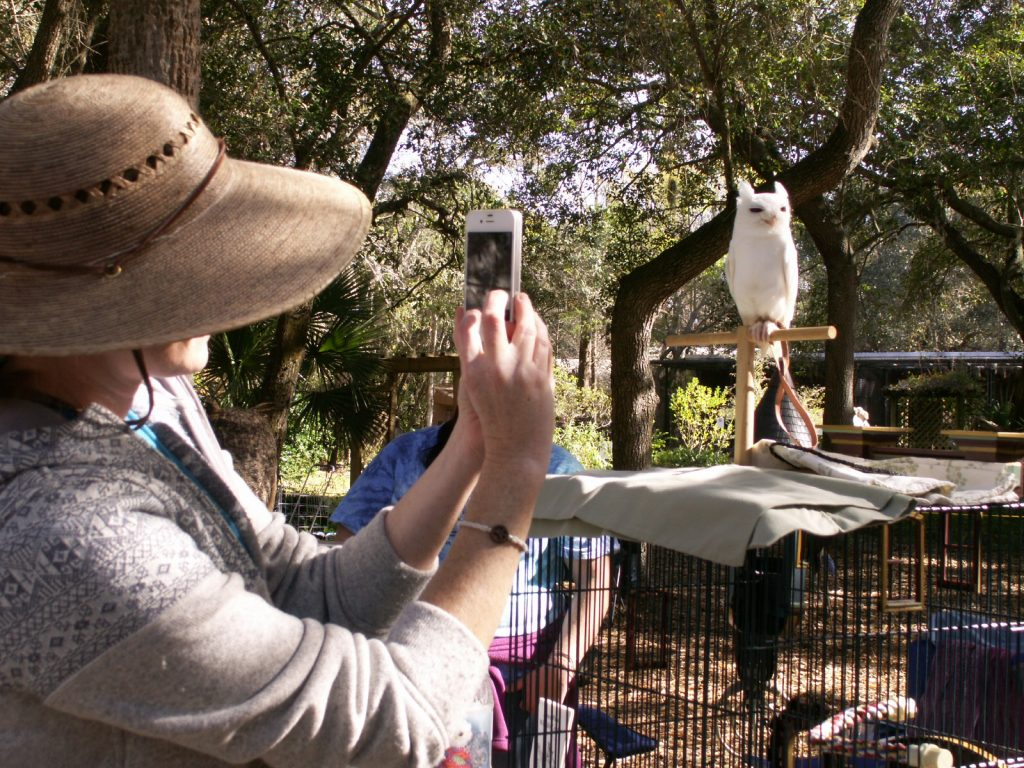 Michelle Tepper of Reddington Shores photographs Luna, a leucistic Eastern screech owl brought to the Raptor Fest by members of the Peace River Wildlife Center in Punta Gorda. Leucism, a genetic mutation that keeps pigment from being properly deposited in a bird's feathers, would make it difficult for Luna to survive in the wild.